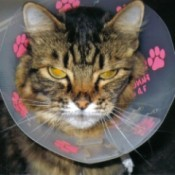 Cat with cone on.