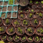 Closeup of small seed pots with small plants sprouting.