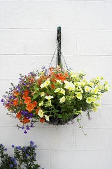Mixed flower hanging basket.
