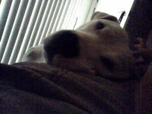 Dark photo of dogs head.