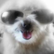 Charlie in dark glasses.