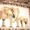 elephant print placemats