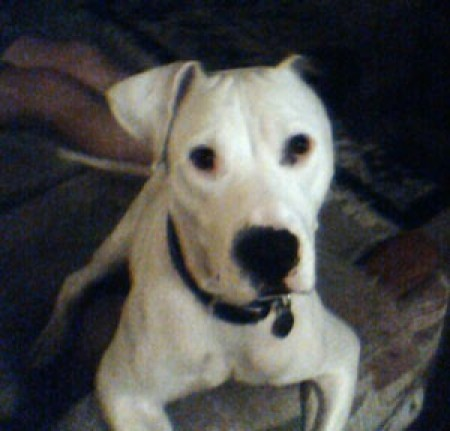 White Dog closeup.