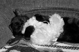 Cat holding a stuffie.