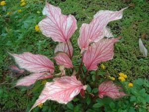 olorful Plant In South Carolina