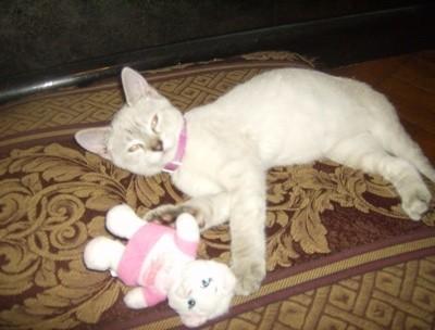 Foxy (Kitten)