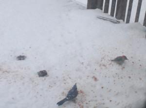birds eating bread