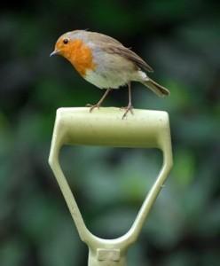 Bird on garden tool handle.