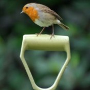 Bird on garden tool handle.