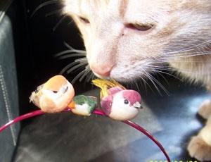 Cat Sniffing Birds