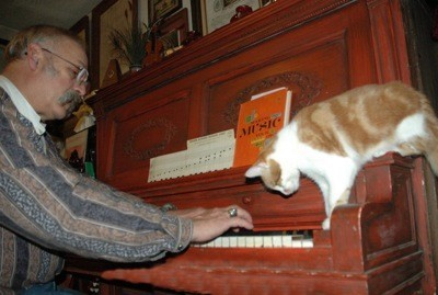 Cat on piano.