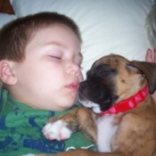 A boy and a boxer asleep together.