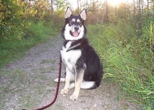 Dog sitting on a leash.