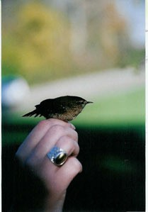 Small bird on hand