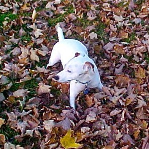 A dog sitting on a pile of leaves.