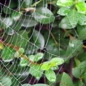 Spiderweb.