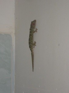 Lizard on wall.
