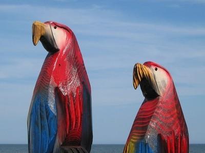 twin wood parrots