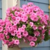 Smart and Thrifty Curb Appeal Ideas