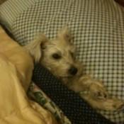 under blankets