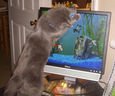 cat viewing aquarium