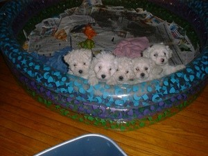 Puppies in blowup pool.