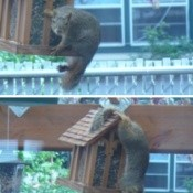 Squirrel on our Back Porch