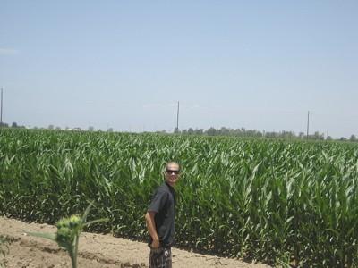 Man standing near cornfield.