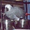 A pet bird sitting in its cage.