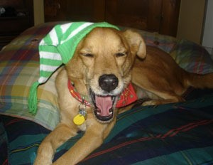 Dog with green and white striped hat on.