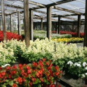 5 Mistakes to Avoid When Shopping for Bedding Plants