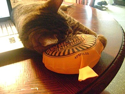 Tiger laying his head on whoopie cushion.
