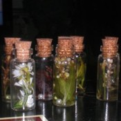 Glass bottles with flowers preserved in oil.