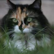 Closeup of Cheryl.