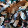 A small dog in a blanket of scraps.