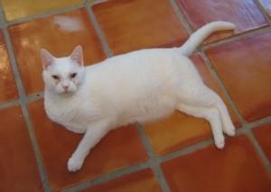 White cat on tile floor