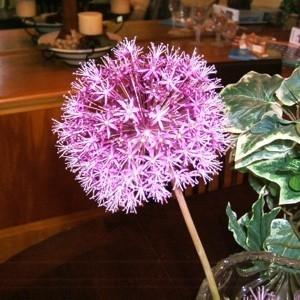 A ball shaped purple flower.