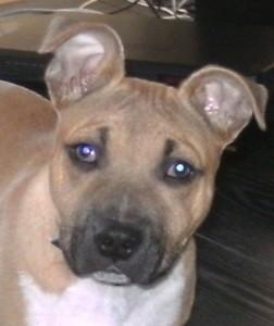 Closeup of tan dog with dark muzzle.