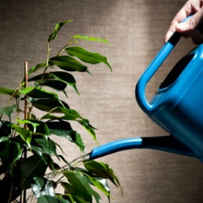 blue watering can and houseplant
