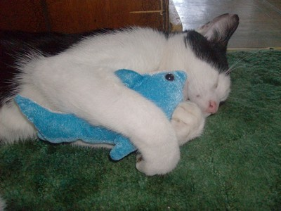 Cat embracing stuffed toy