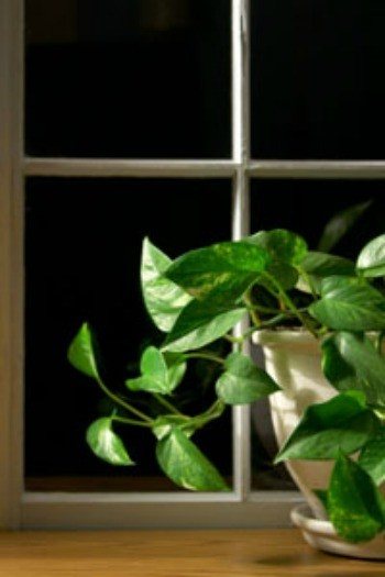 Houseplants for Low Light & The Best Houseplants for Low Light | ThriftyFun azcodes.com