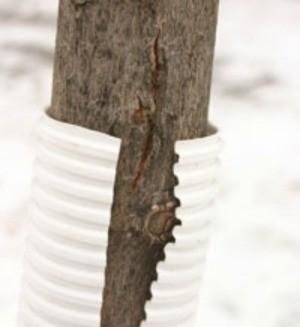Preventing Winter Damage