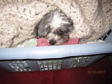 In laundry basket.