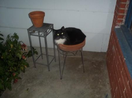 Flower the cat in a flower pot.