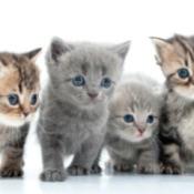 4 cute kittens.