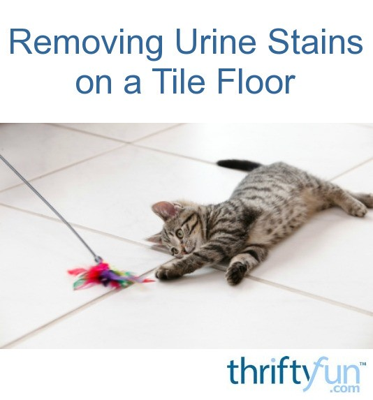 How To Clean Dog Urine Stains From Concrete Patio