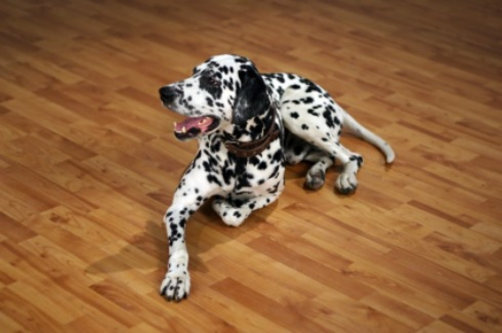 Cleaning Pet Urine Stains and Odors from Laminate Flooring | ThriftyFun