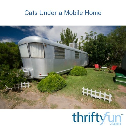 Cats Under a Mobile Home | ThriftyFun on mobile home sunroom additions, mobile home living remodel, mobile home roof additions, kitchen room additions, mobile home garage additions, mobile home porch additions, mobile home carport additions,