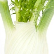 Fennel Stalks