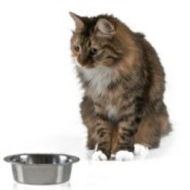 A cat with an empty food dish.